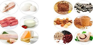 the use of protein products for weight loss